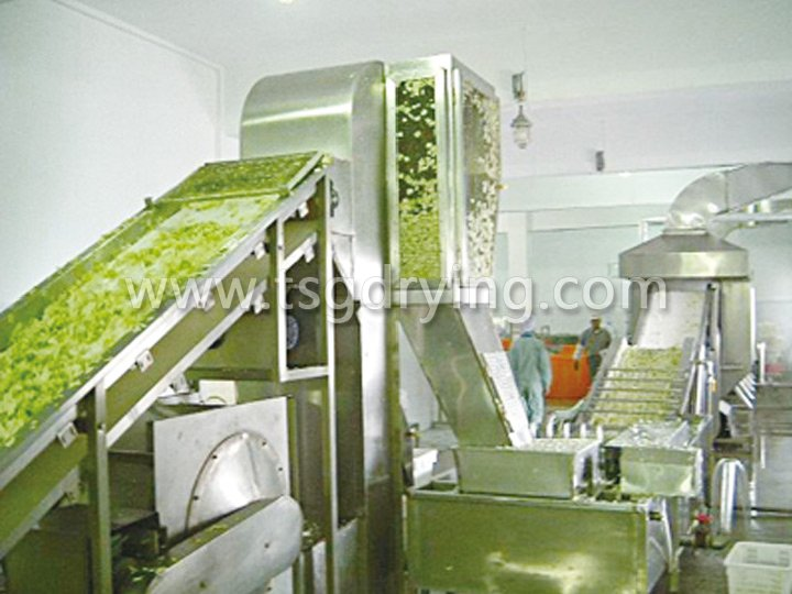DWC Dehydrated Vegetables Belt Dryer